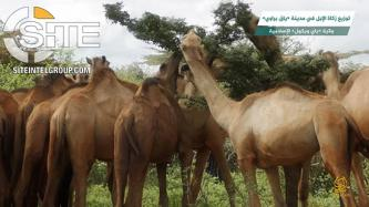 Shabaab Video Focuses on Charitable Giving of Camels to Needy Somalis, Winning of Hearts and Minds